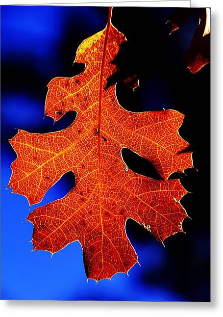 Fall Leaf Closeup Greeting Card by Michael Courtney
