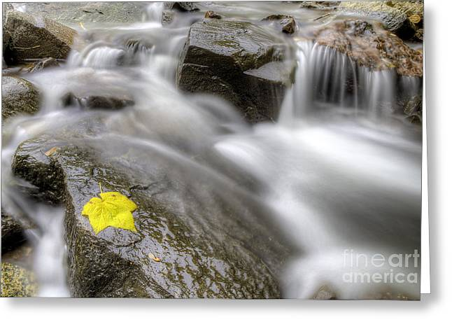 Fall Leaf In Stream Greeting Card