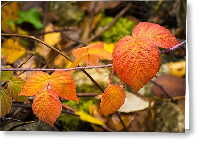 Fall Leaf Patterns Greeting Card by Bill Pevlor
