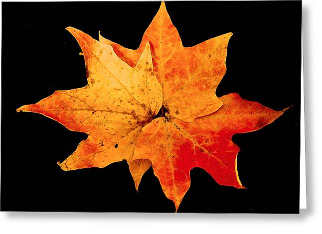 Greeting Card featuring the photograph Fall Leaf Trio by Dee Dee  Whittle