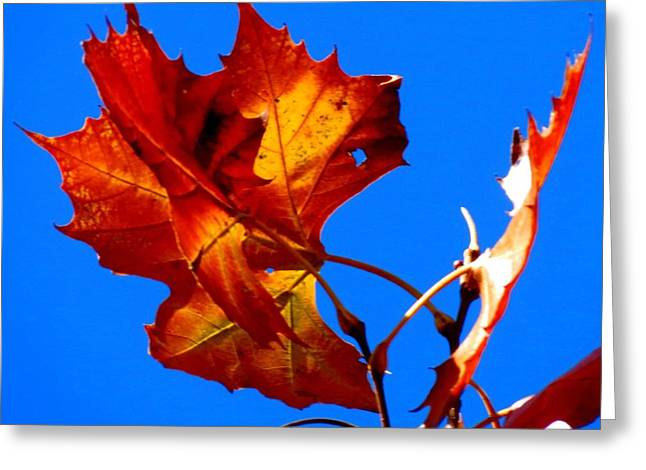 Fall Leave Greeting Card by David  Norman