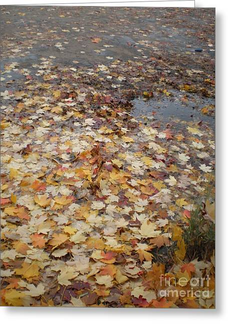 Fall Leaves And Puddle Greeting Card