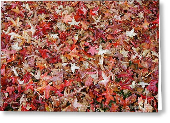 Fall Leaves Greeting Card by Bev Conover