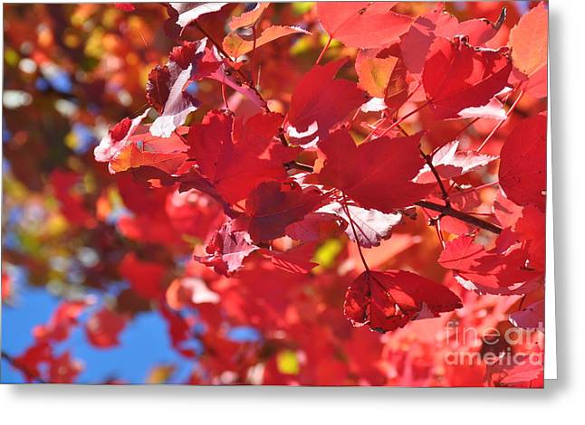 Greeting Card featuring the photograph Fall Leaves In Oregon by Mindy Bench