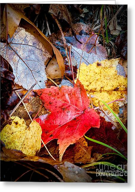 Fall Leaves In The Rain Greeting Card