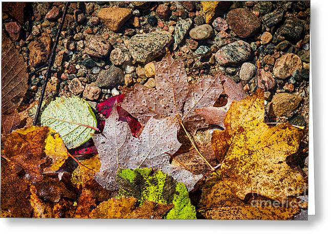 Fall Leaves In Water Greeting Card by Elena Elisseeva