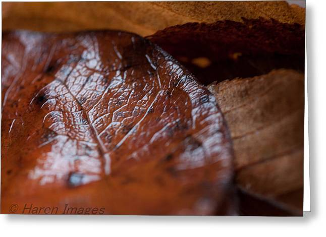 Greeting Card featuring the photograph Fall Leaves by Haren Images- Kriss Haren