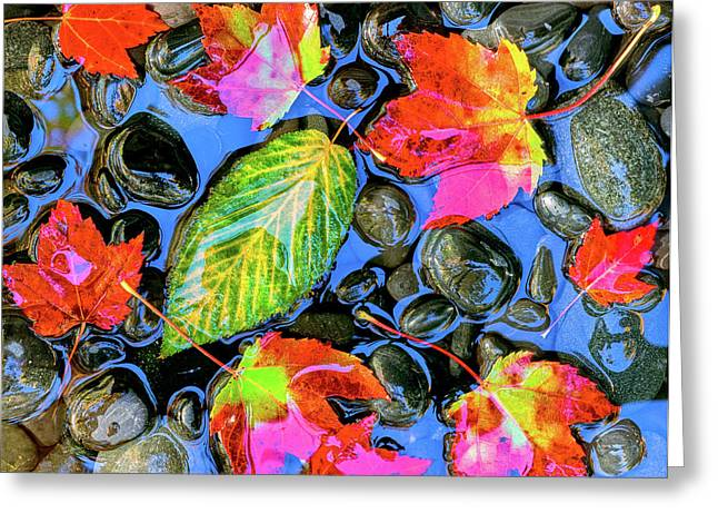 Fall Leaves On Black Rocks In Water Greeting Card