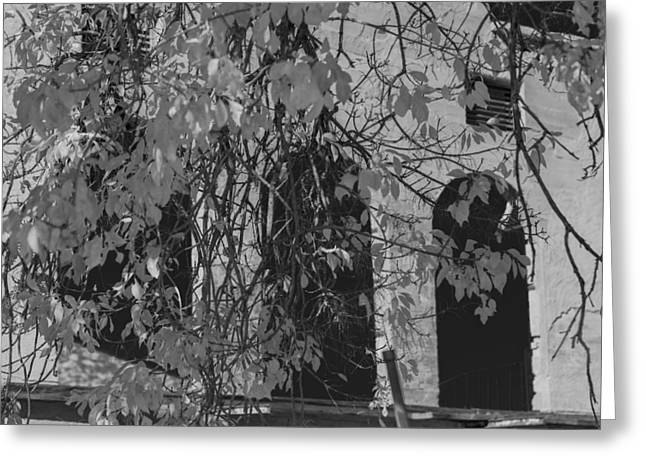Fall Leaves On Open Windows Jerome Balck And White Greeting Card