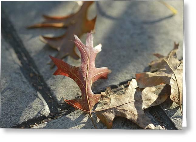 Autumn Oak Leaves On Sidewalk Greeting Card by Valerie Collins