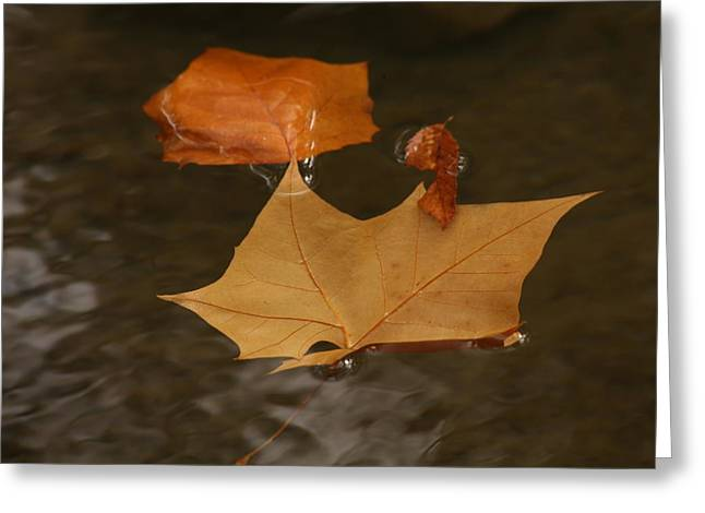 Fall Leaves On Water Greeting Card