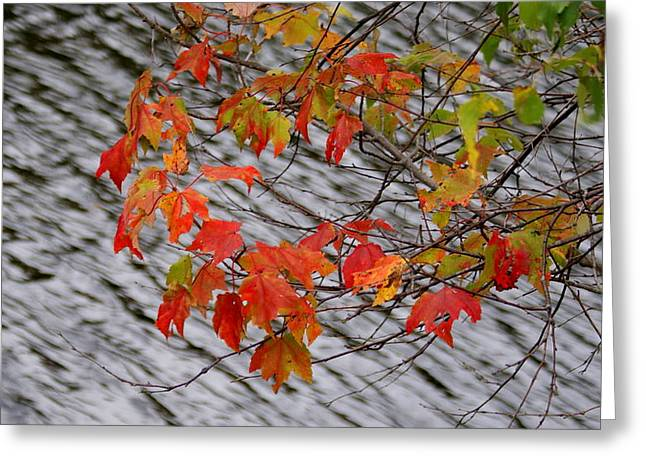 Fall Leaves Over The Lake Greeting Card by Lois Lepisto