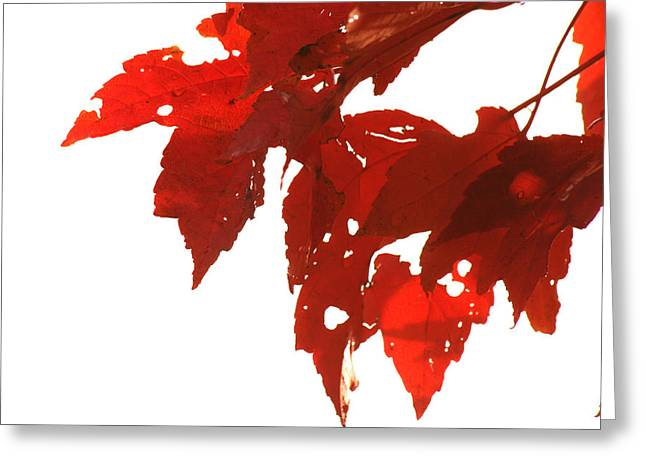 Fall Leaves Greeting Card by Susie DeZarn