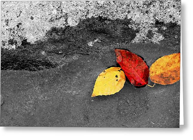 Fall Leaves Greeting Card by Wendell Thompson