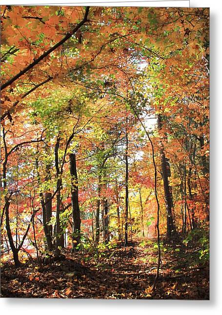 Fall Light Greeting Card by AR Annahita