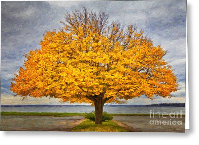 Fall Linden Greeting Card by Verena Matthew