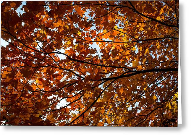 Greeting Card featuring the photograph Fall Maples - 02 by Wayne Meyer