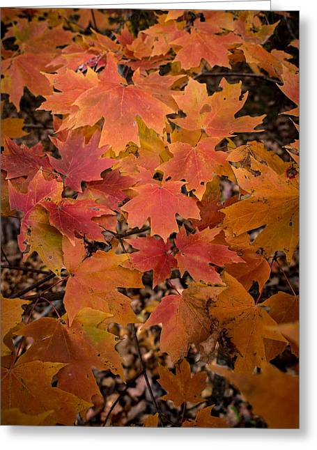 Greeting Card featuring the photograph Fall Maples - 03 by Wayne Meyer