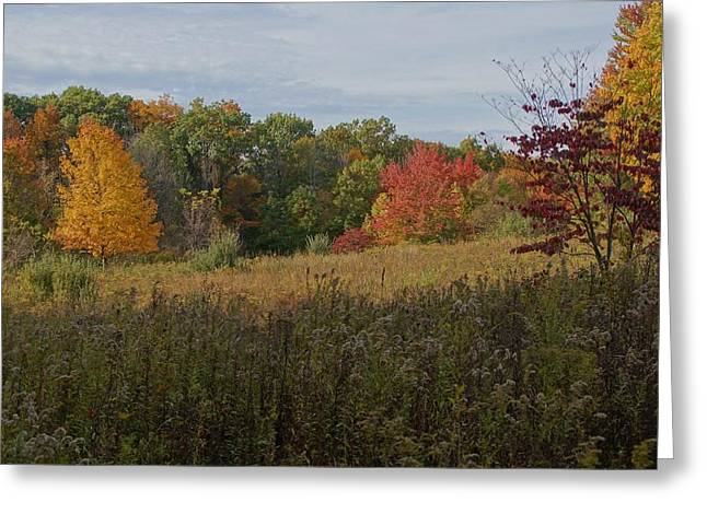 Fall Meadow Greeting Card by Doug Hubbard