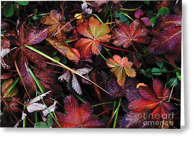 Greeting Card featuring the photograph Fall Mix by Janice Westerberg