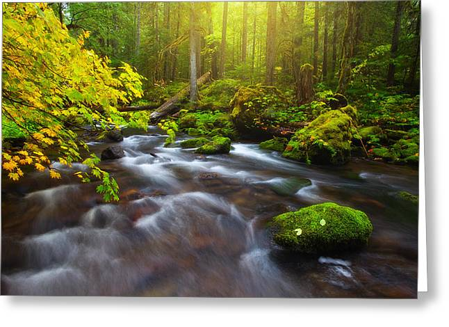 Fall Morning Hike Greeting Card by Darren  White