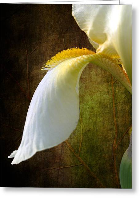 Fall Of Iris Greeting Card