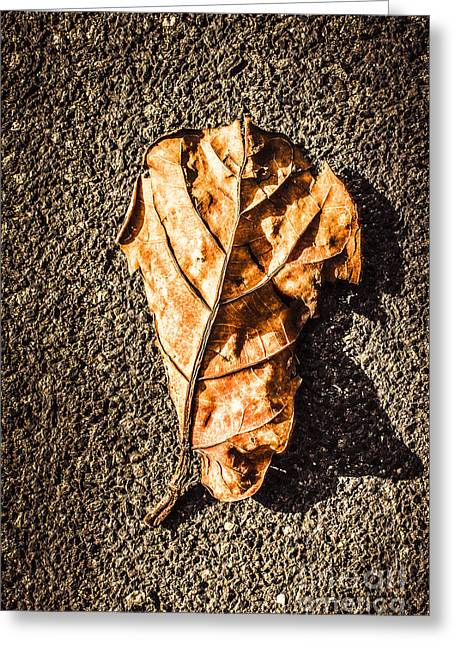Fall Of Seasons Greeting Card