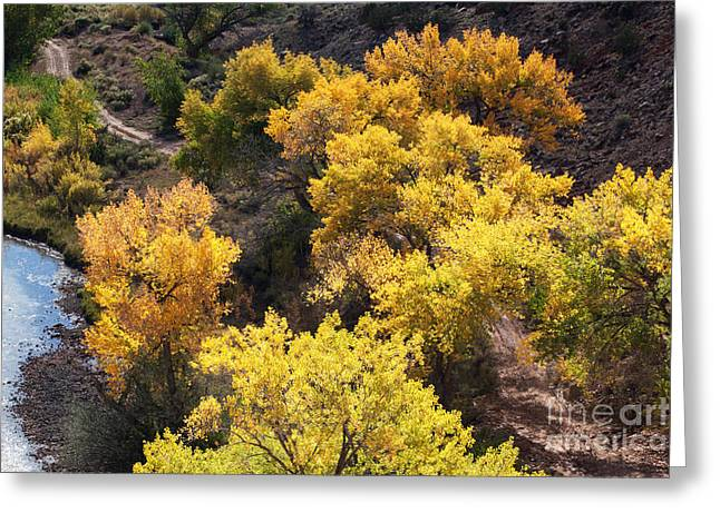 Greeting Card featuring the photograph Fall On The Chama River by Roselynne Broussard