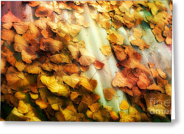 Fall On The Roof Greeting Card by Bobbi Feasel