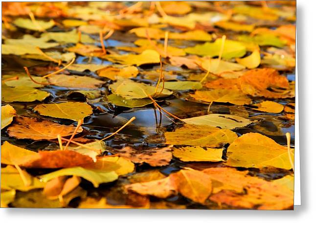 Fall On The Water  Greeting Card