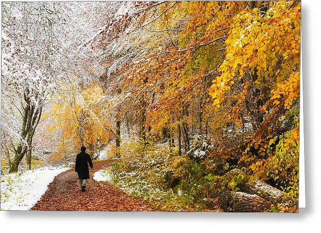 Fall Or Winter - Autumn Colors And Snow In The Forest Greeting Card by Matthias Hauser