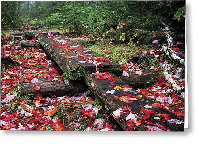 Fall Path Greeting Card by Dave Cleaveland