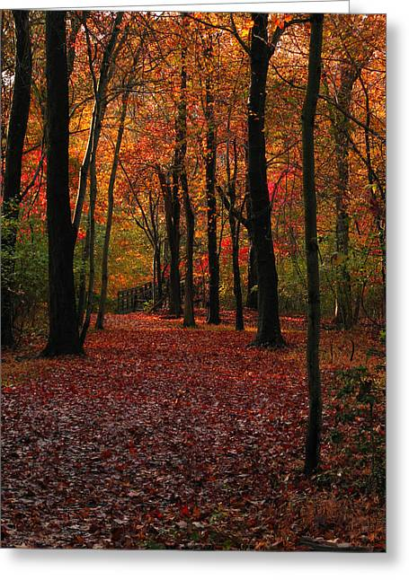 Greeting Card featuring the photograph Fall Path by Raymond Salani III