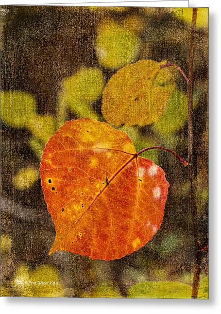 Fall Quaking Aspen Greeting Card