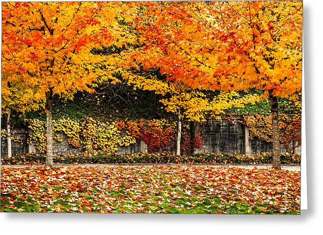 Autumnl Rainbow Greeting Card