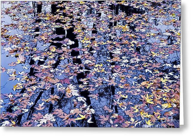 Greeting Card featuring the photograph Fall Reflections by Alan L Graham
