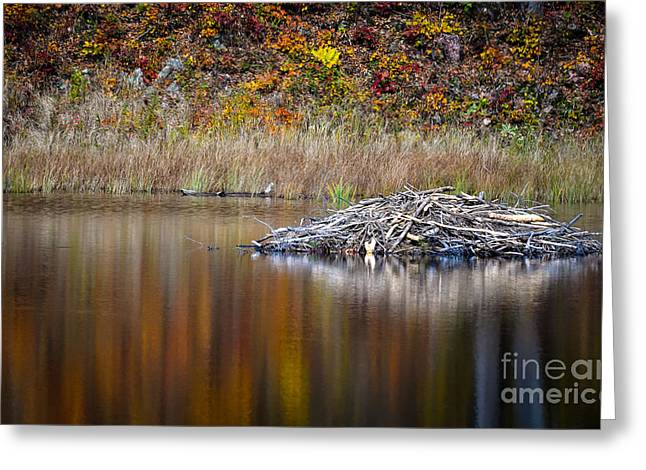 Fall Reflections Greeting Card by Bianca Nadeau