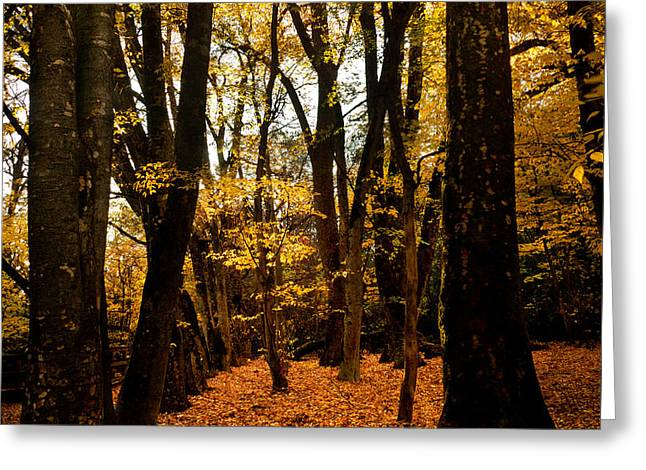 Fall Scene In Bidwell Park Greeting Card