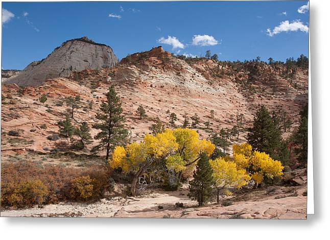 Greeting Card featuring the photograph Fall Season At Zion National Park by John M Bailey