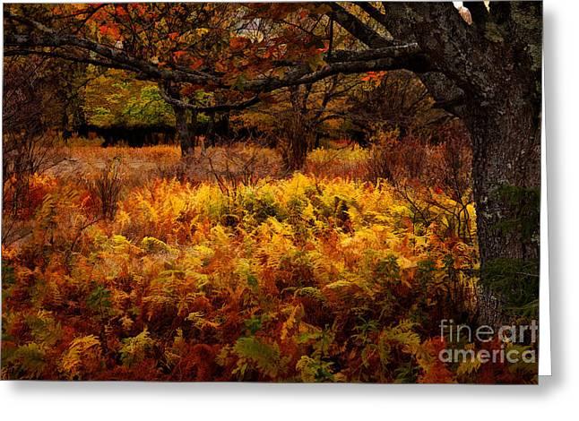 Fall Shadows - Dolly Sods West Virginia Greeting Card by Dan Carmichael