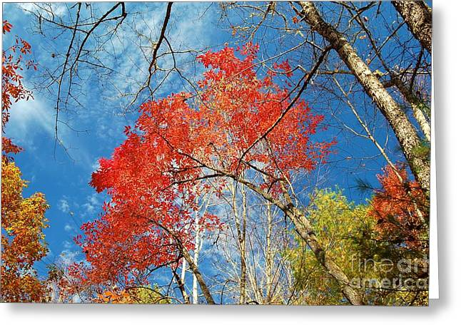 Fall Sky Greeting Card