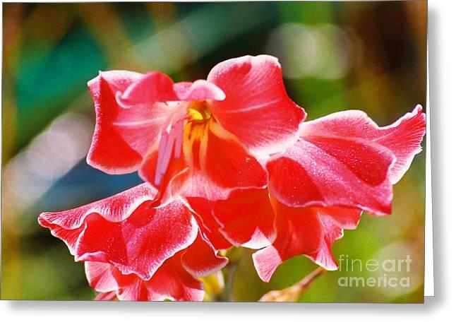 Fall Sparkle Gladiola Greeting Card by Cynthia Syracuse