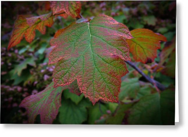 Fall Sparkle Greeting Card by Teresa Schomig