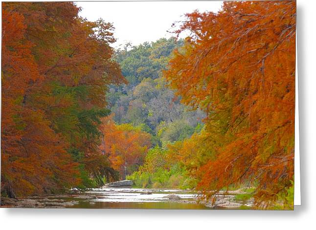 Fall Spectacular Greeting Card by David  Norman