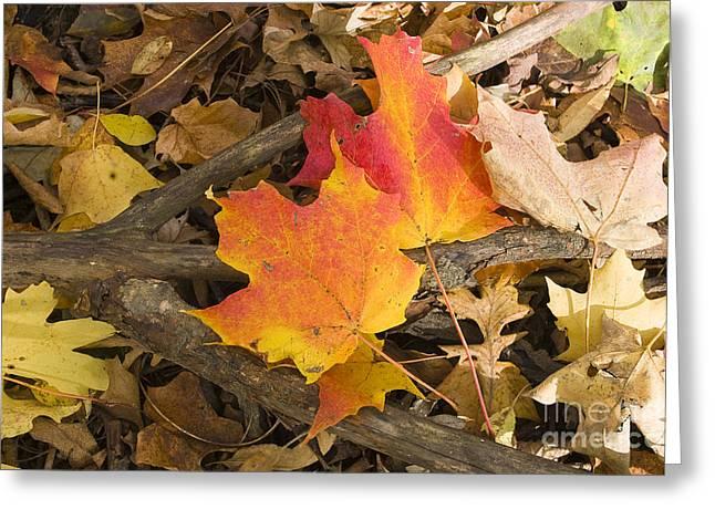 Fall Greeting Card by Steven Ralser