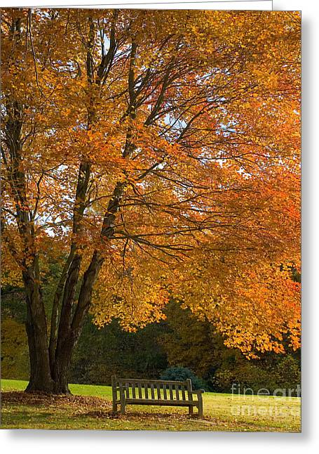 Fall Tree And Bench Greeting Card