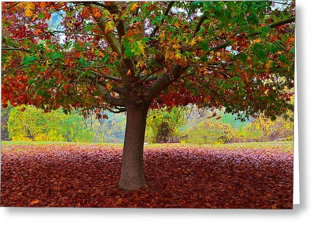 Fall Tree View Greeting Card