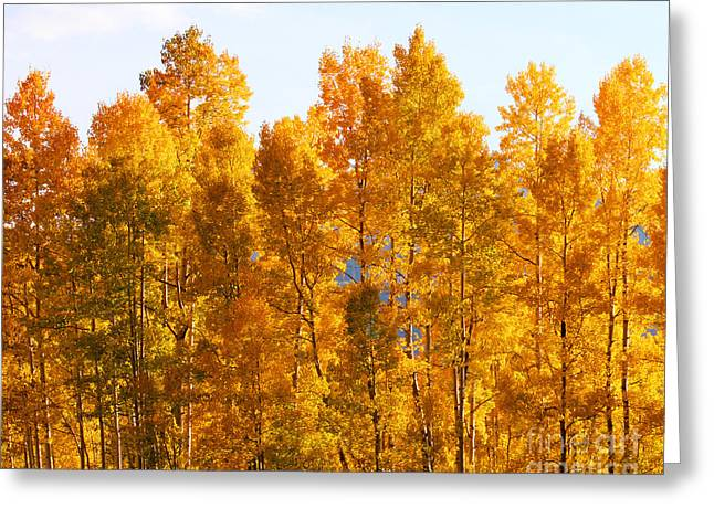 Fall Trees 8x10 Crop Greeting Card