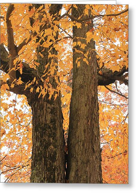 Greeting Card featuring the photograph Fall Trees by Amazing Jules