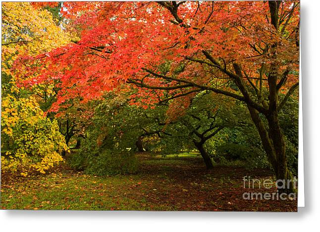 Fall Trees Greeting Card by Amanda Elwell